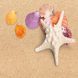 oceantreasure avatar