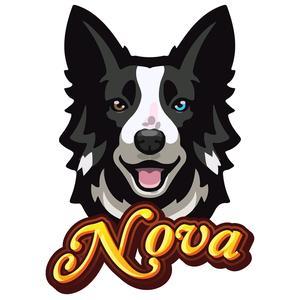 Nova The Collie