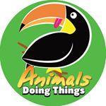 @animalsdoingthings