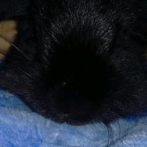 BunBun_The_Rabbit 🐇