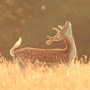 Bambi_🦌_Lee