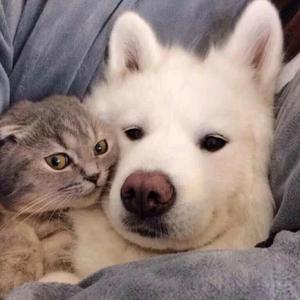 dogcatguy1