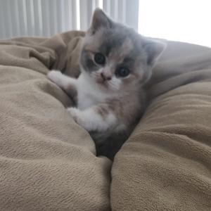 Stormy the kitten