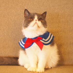 猫カフェぷちまりーおきなわ北谷店