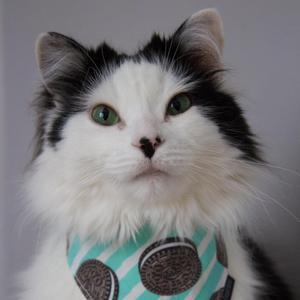 The Oreo Cat®