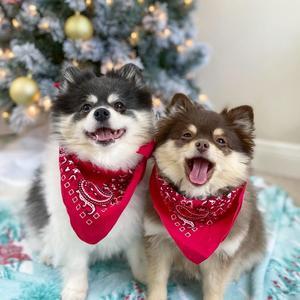 Scout and Suki